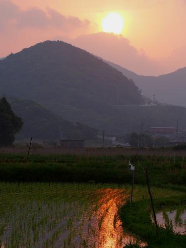 田んぼに映る夕陽