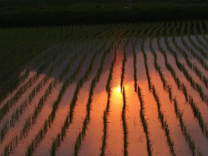 田んぼの夕焼け