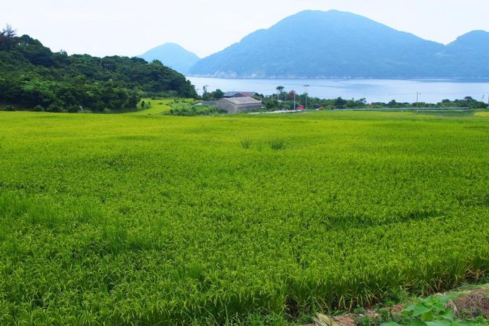 里町の田んぼ