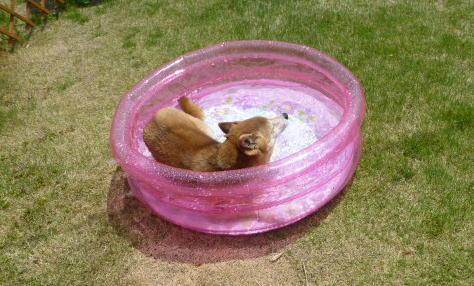 お庭プール