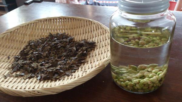 枇杷の葉と種
