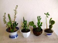 多肉植物とサボテン苔玉