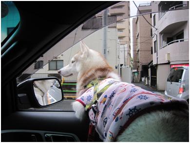 komachi-04.jpg