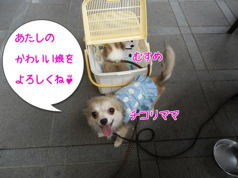 お迎え~♪