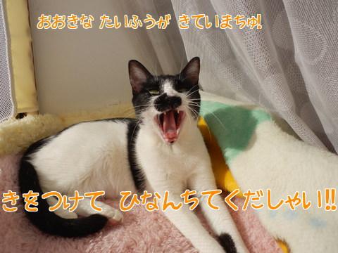 台風情報!1
