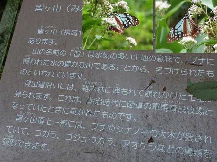 mn8_3.jpg