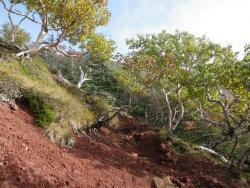 登山道 (3)
