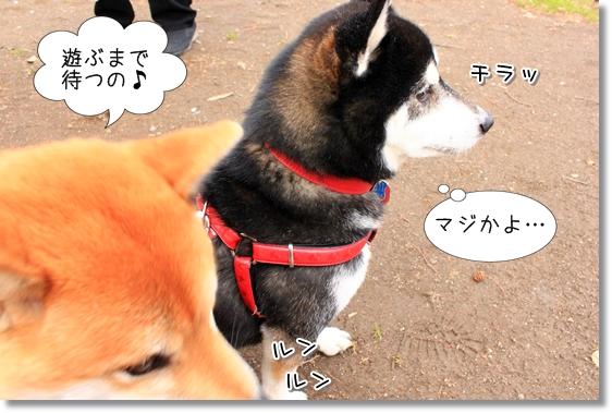 10_20130430012705.jpg