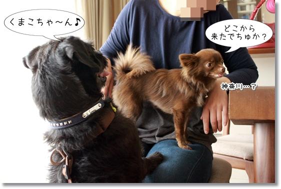 10_20130601153749.jpg