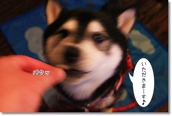 11_2013081317480046e.jpg