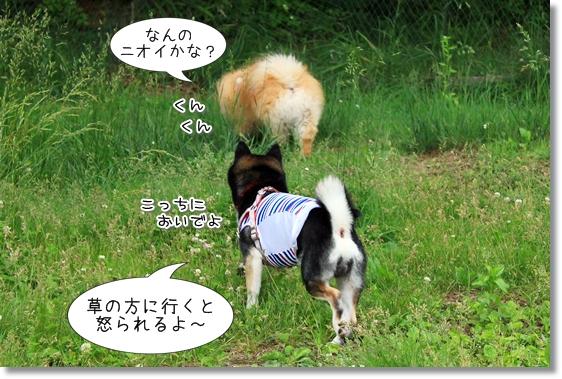 12_20130725154538.jpg