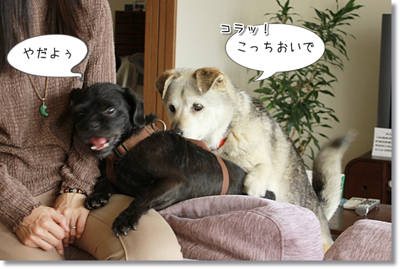 14_20130526001752.jpg