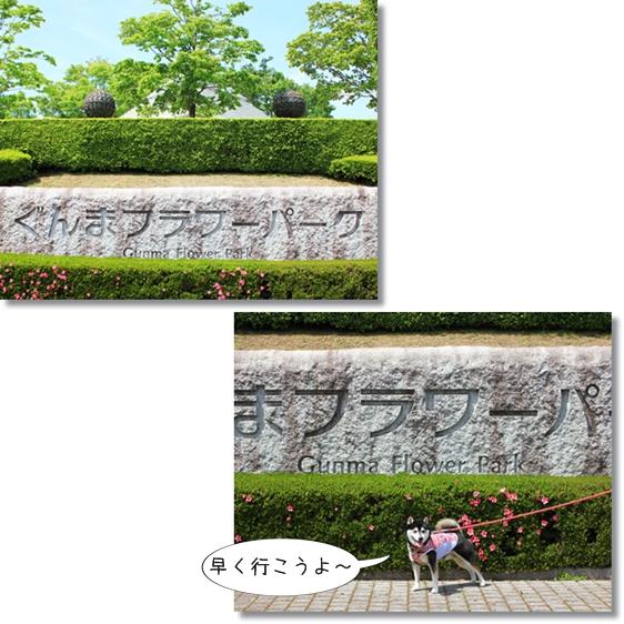 1_20130626155945.jpg