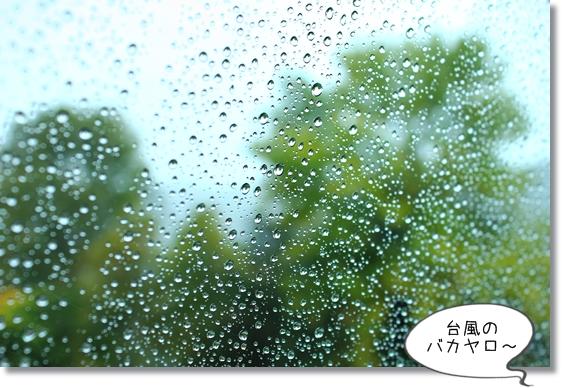 5_20131030154132936.jpg