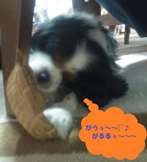 琥龍&いろり83