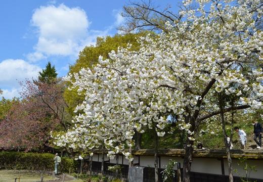 鶴ヶ城 (117)_R