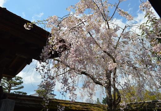 鶴ヶ城 (136)_R