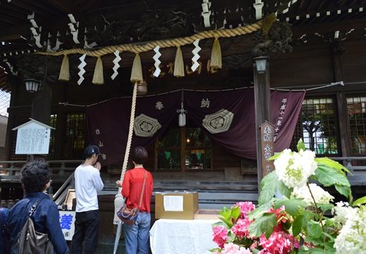 白山神社 (51)_R