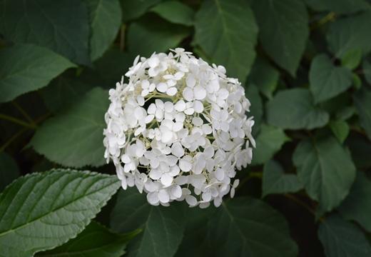 白山神社 (93)_R