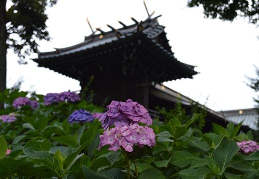 白山神社 (100)_R