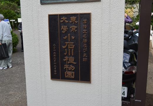 春日・10小石川 (214)_R