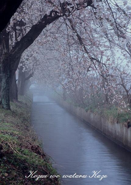13桜21