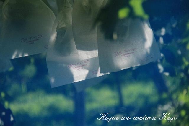 夏の情景3(小)