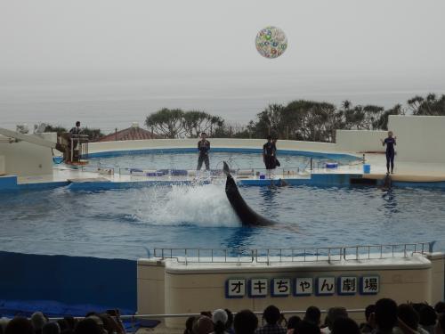オキちゃん劇場では、青い海をバックに海洋博公園のアイドル、イルカのオキちゃん