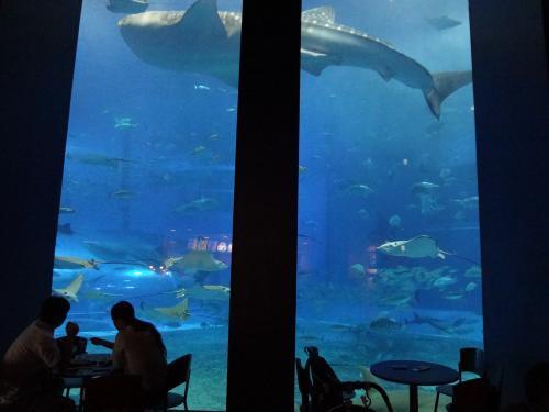 カフェ「オーシャンブルー」の店内から見た大水槽