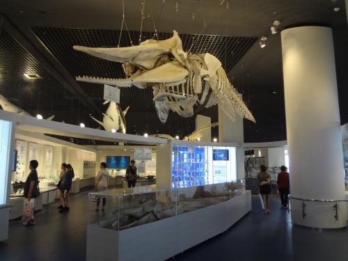 天井からつられたクジラの骨格標本が迫力満点