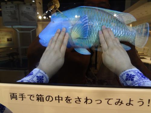 箱のなかの魚の標本にもさわれます