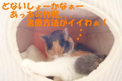 s-201411016.jpg