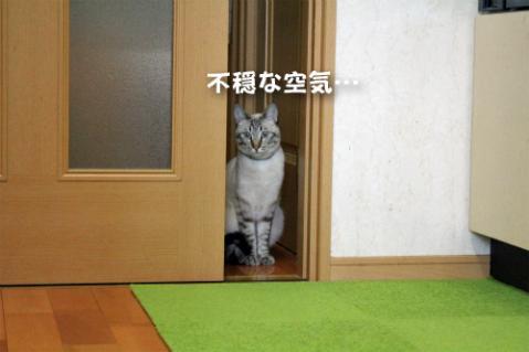 2013_0512_01しぃくん