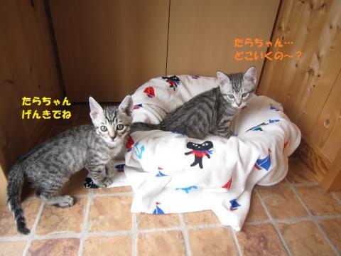 028かつお・ごまたん20130511