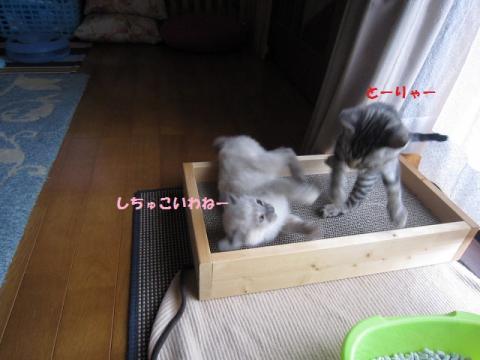 007セリごま20130516