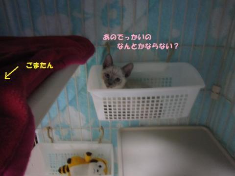 013セリちゃん20130517
