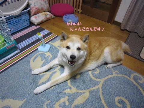 017うめちゃん20130517