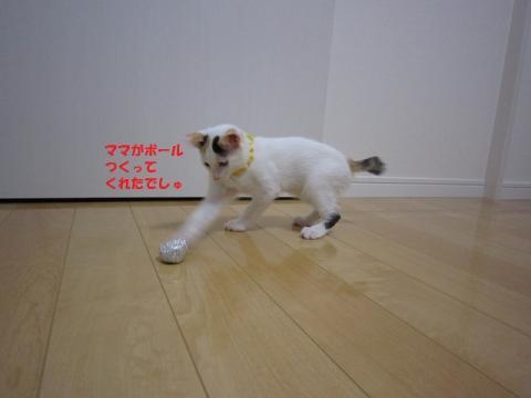 068じゃがちゃん20130524