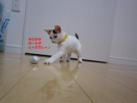 069じゃがちゃん20130524