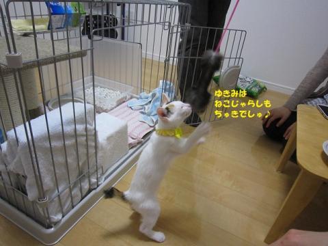 127じゃがちゃん20130524