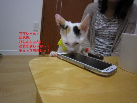 137じゃがちゃん20130524