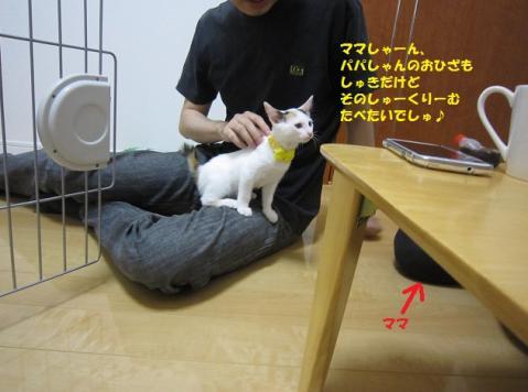 142じゃがちゃん20130524