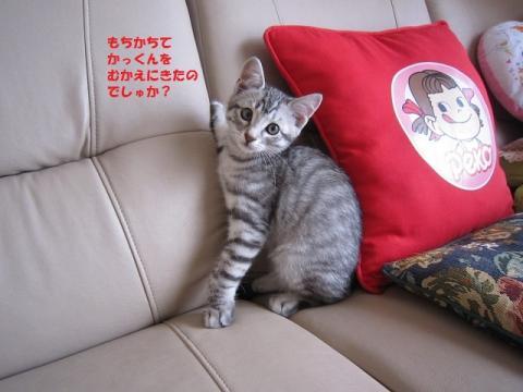 003かつおくん20130526