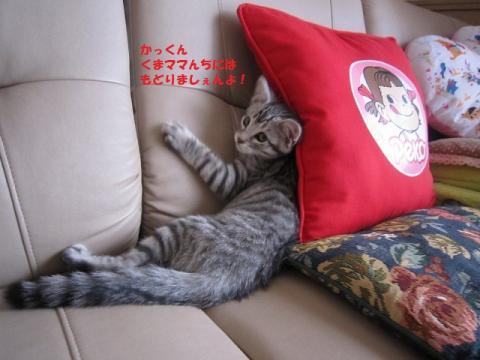 004かつおくん20130526