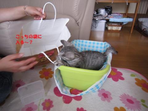 026かつおくん20130526