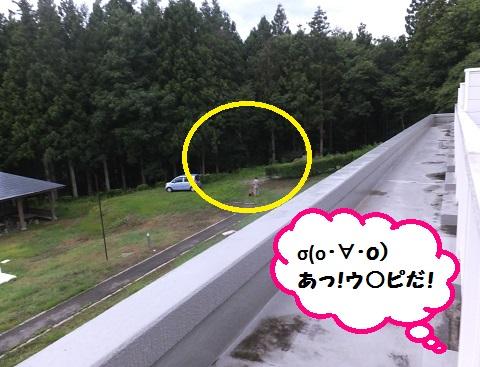 20130714mu4.jpg