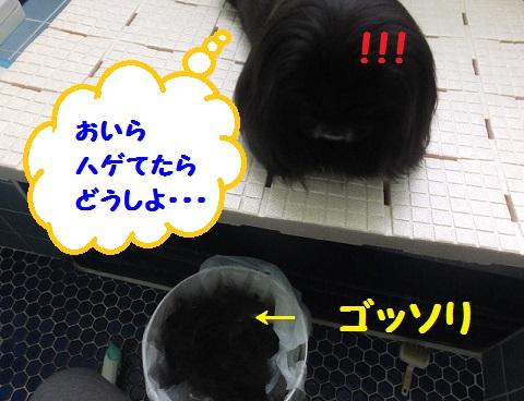20130808mu1.jpg