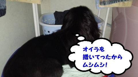 20130818mu1.jpg