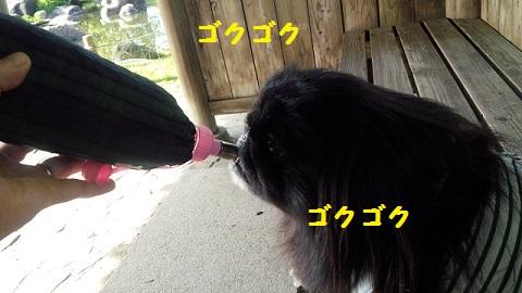 20130909mu8.jpg