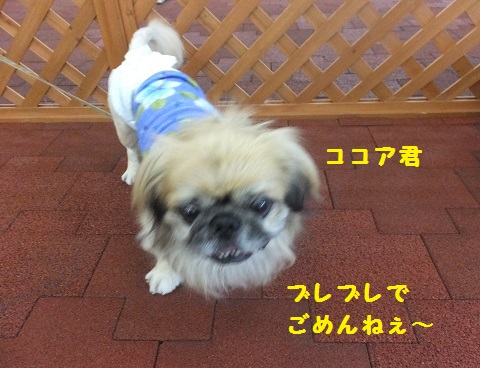 20130915mu46.jpg